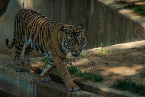 National Zoo - 8