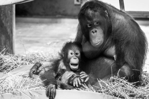 National Zoo w Steve -42