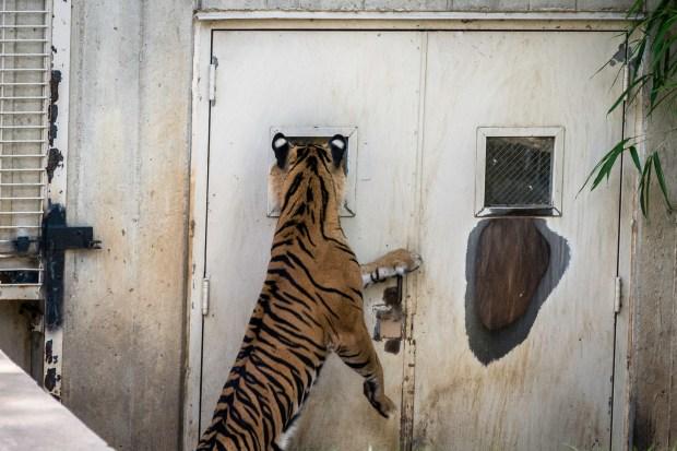 National Zoo w Steve -45