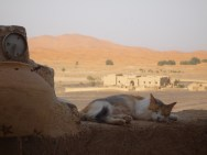 One of the highlights of Morocco was that there were cats everywhere. Everywhere!