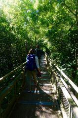 Iguazu (1) - 13 of 86