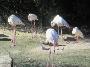 I didn't know flamingos could sleep like the one in the back!