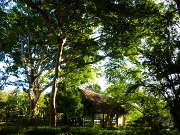 Lush resort grounds