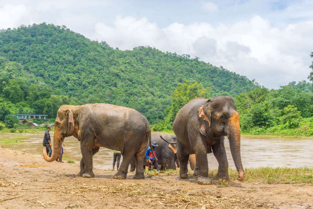 Elephant Nature Park - top things to do in Chiang Mai