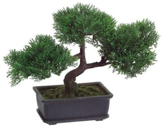 20 Holiday Gift Ideas for Japanese Culture Lovers - Bonsai Tree