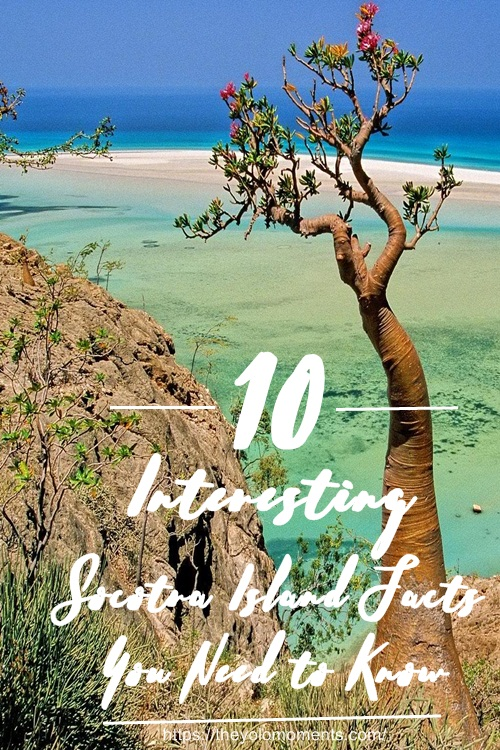 Interesting Socotra Island Facts You Need to Know - The Yolo Moments