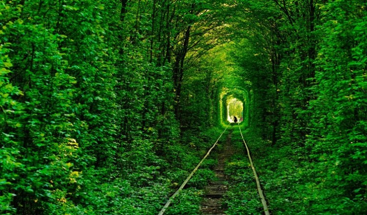 Facts About Tunnel of Love - Popular Photogenic Green Leafy Railway