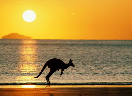 photography-destinations-australia-kangaroo-sunset