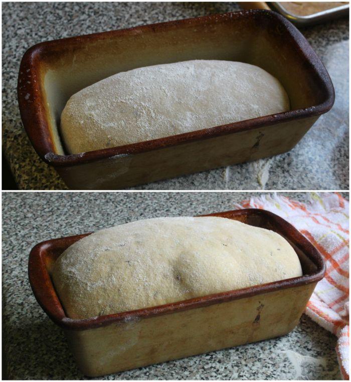 bread rise