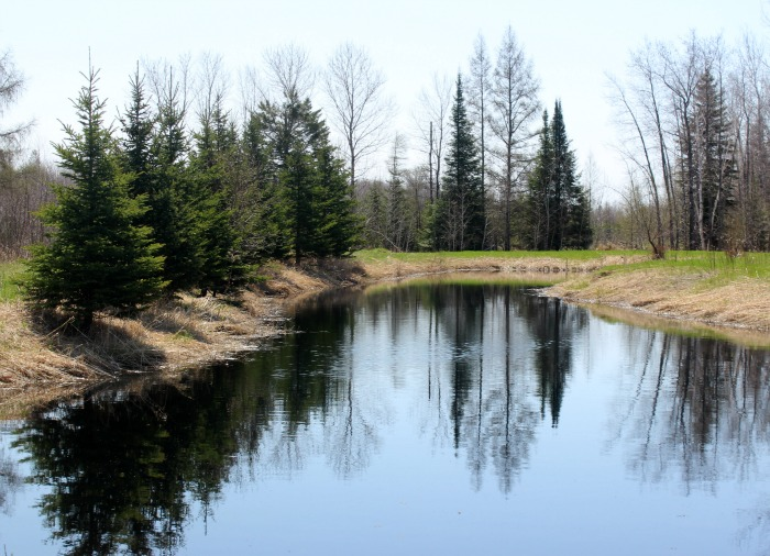 pond at kelvins