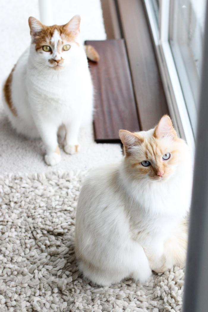 kitty meow meow-4