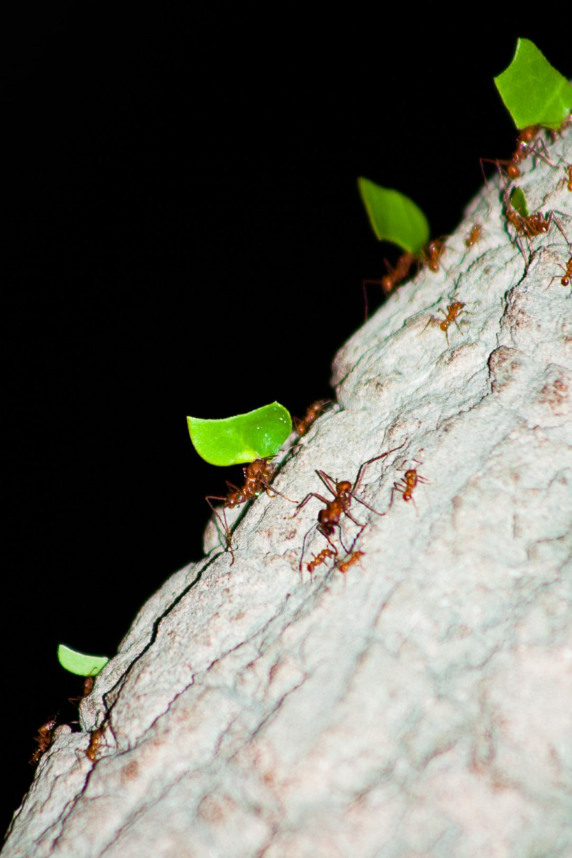 Teamwork | Leaf cutter ants | Chester Zoo | The Yorkshire Dad of 4