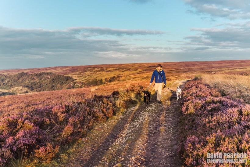 Walking Your Dog | The Yorkshire Dad of 4