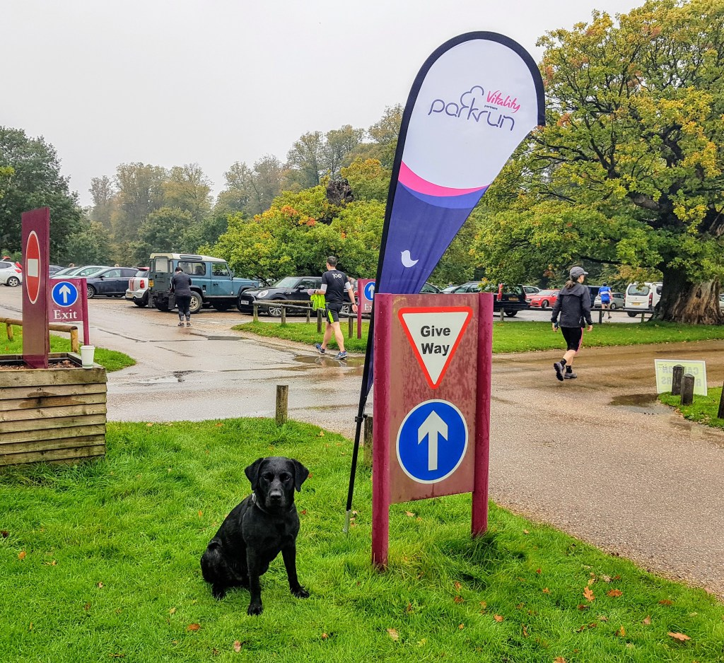 Duke the black lab at Park Run | The Yorkshire Dad of 4