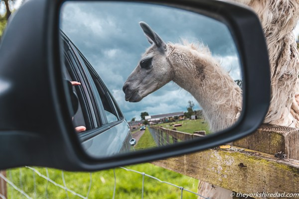 A Safari at Monk Park Farm | The Yorkshire Dad of 4