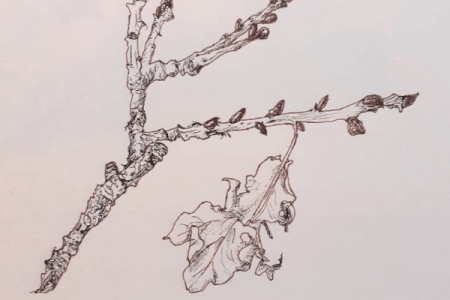 hand drawn branch and leaf