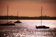 Auckland Sailboats