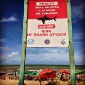Brazilian sharks.