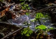 _MGL6465_Spiderweb2