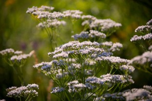 _MGL6469_Wildflowers