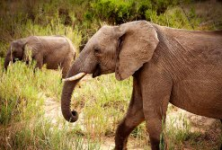 IMG_0405_Elephants_web