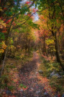 Hiking trail.