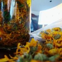 Healing Calendula and Lavender Oil
