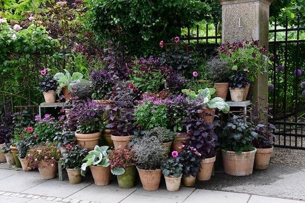 mixed plants in pots and garden containers