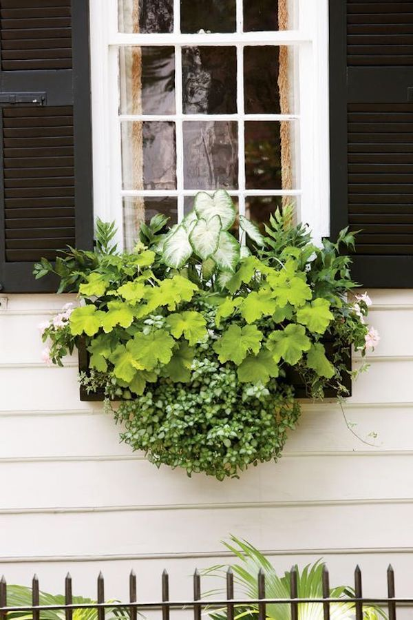 greenery in window boxes as a beautiful container garden idea