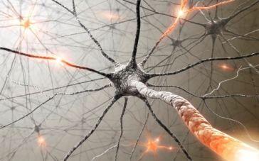 Las-neuronas-no-se-regeneran-otro-mito-derrumbado