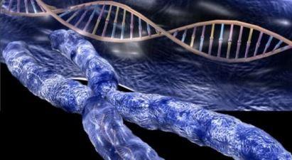 telomero1