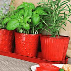 Robert Allen 'Concord' Herb Garden Set