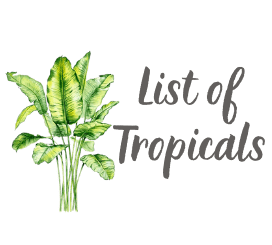List of Tropicals
