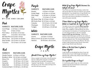 Crape Myrtle Brochure