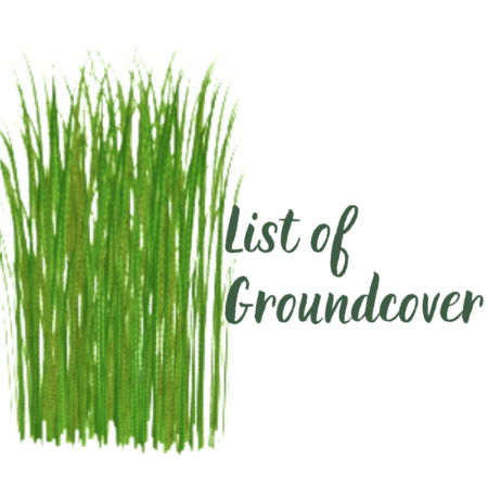 List of Groundcover