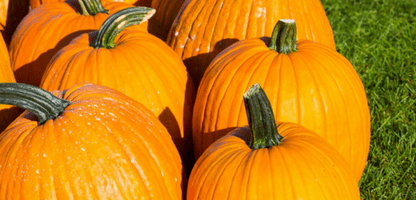 Pumpkin Nutrition Benefits