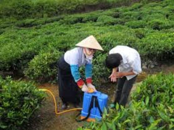 Phòng Trừ Sâu Bệnh Cho Cây trà xanh