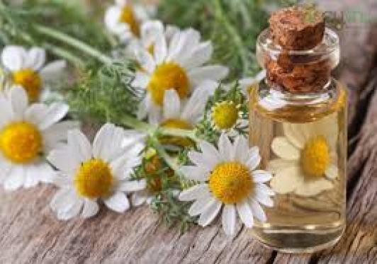 Chị em cho dầu oliu vào khoảng nữa lọ thủy tinh rồi cho hoa cúc vào cho đến khi đầy lọ.