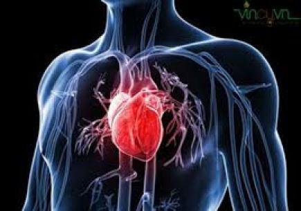Hỗ trợ & phòng ngừa bệnh tim