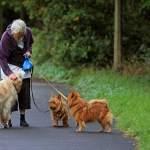 elderly exercise activity