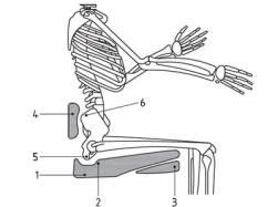 Figure 4 Pressure redistribution under the thighs