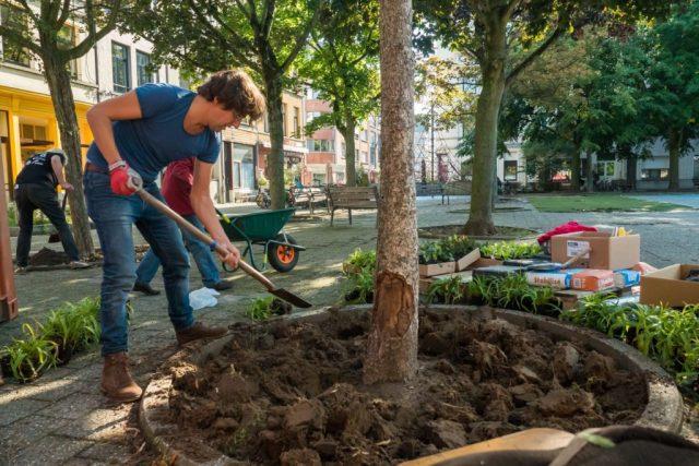 Buren onderhouden een boomspiegel