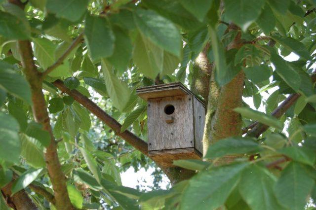 Nestkastje in een boom