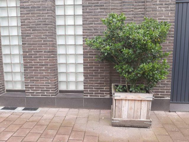 Plantenbak voor gevel