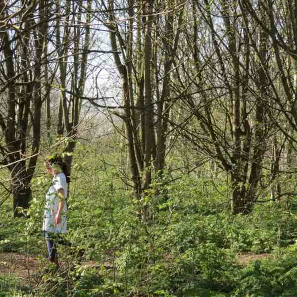 Looking for things to do with nature on a woodland walk