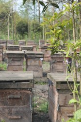 Sichuan-style bee hives. Pretty much like bee hives anywhere else.