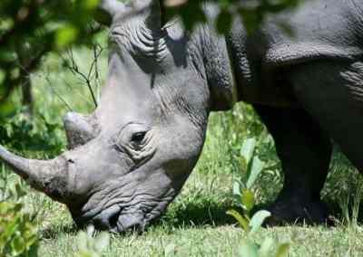 Zimbabwe and Zambia anti-poaching drones