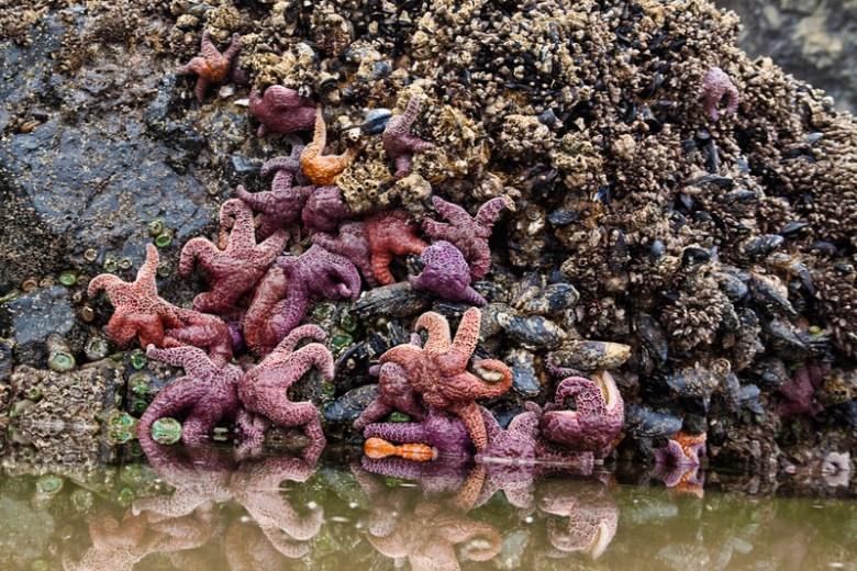 Starfish Haystack Rock