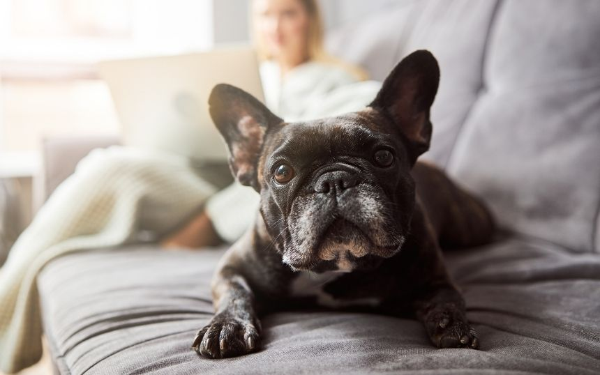 Innovative Products That Will Transform Your Dog's Life