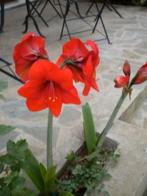 The Red Flowers